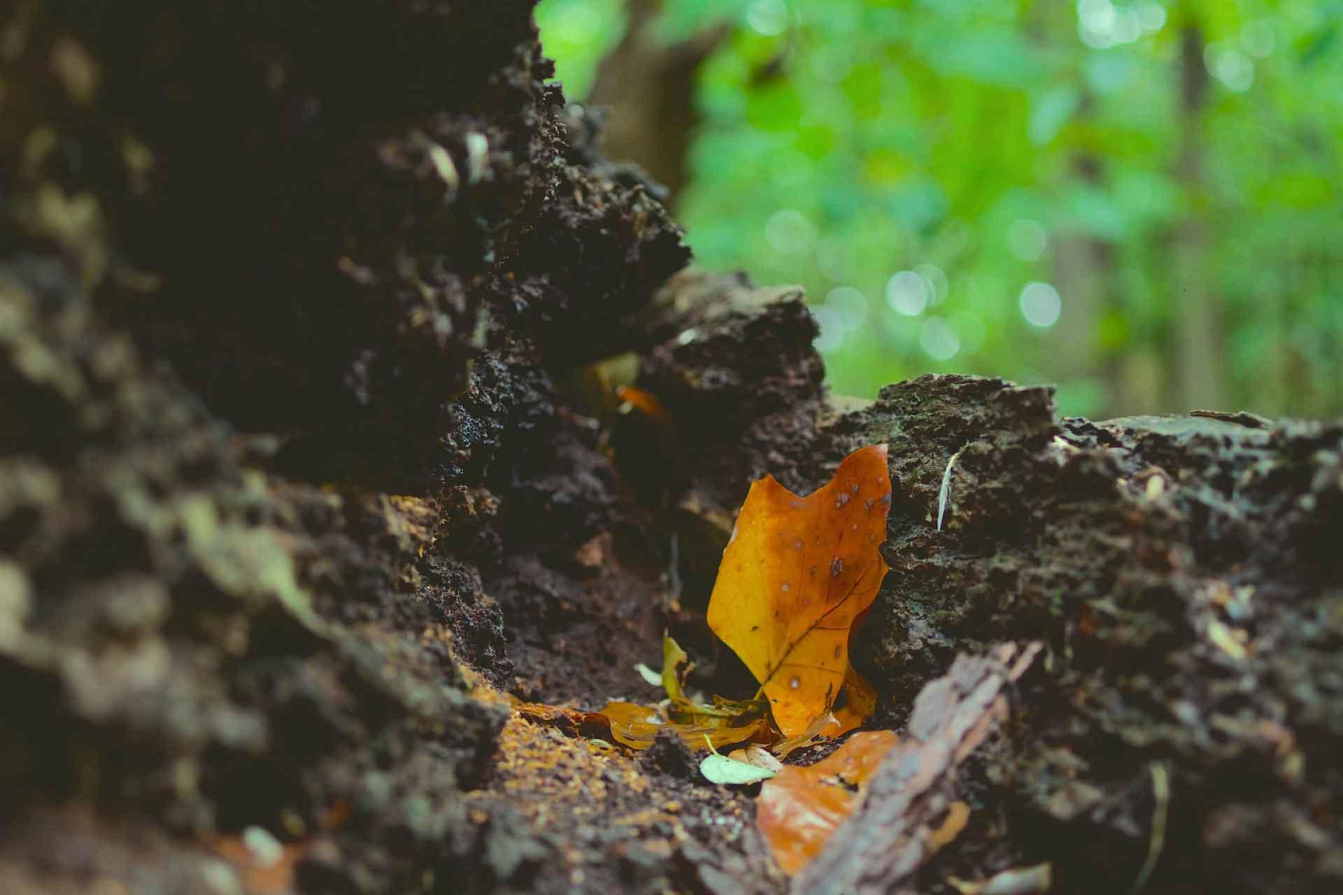 自然露營區 – 樹木